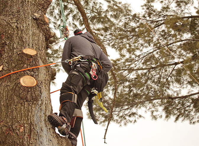 Houston Arbor Care Tree Service employee trimming a tree