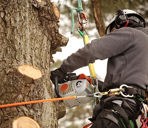 Houston Arbor Care Tree Service employee cutting a tree down