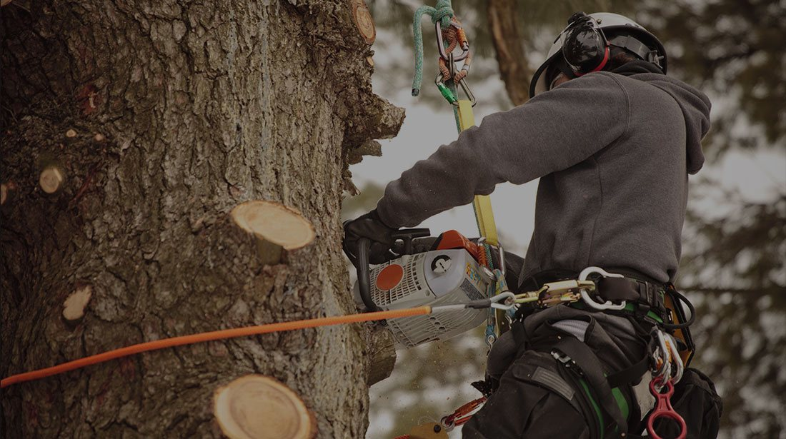 Houston Arbor Care Tree Service: Stump and tree removal in Houston, Memorial  and Briarforest