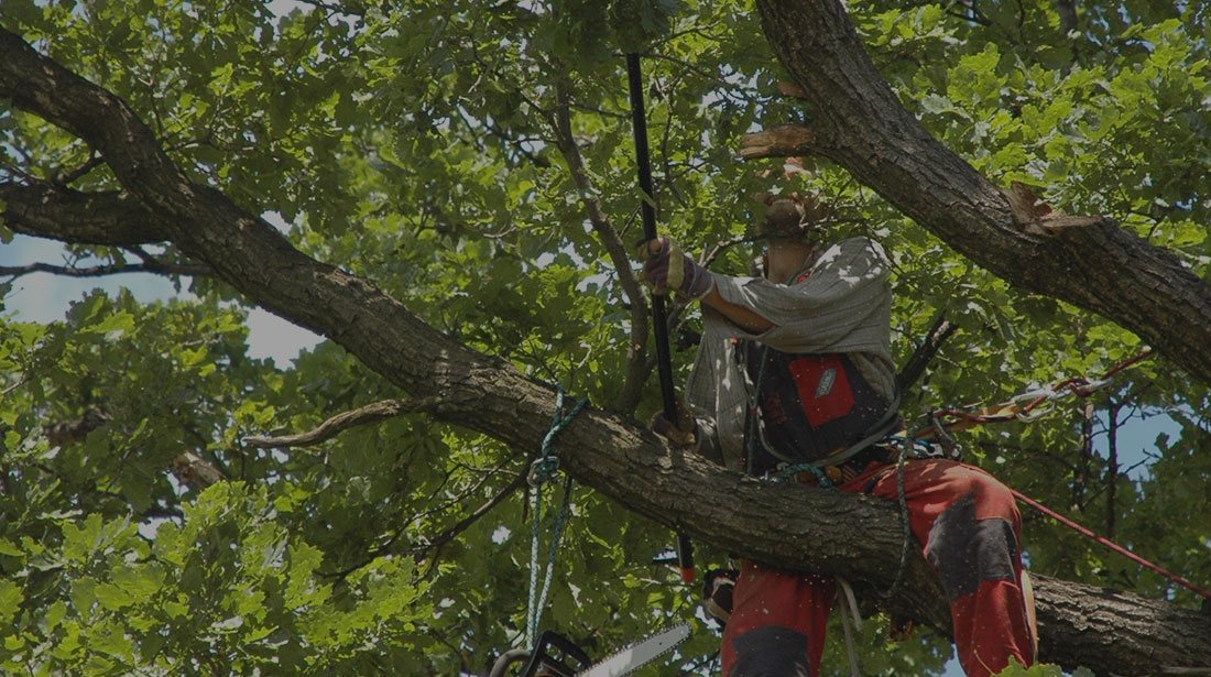 Houston Arbor Care Tree Service: Tree cabling and bracing in Houston, Memorial  and Briarforest