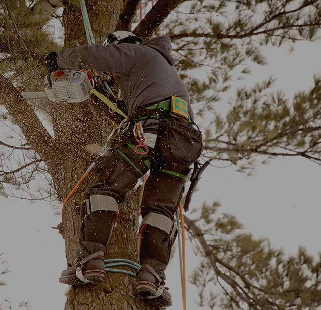 Houston Arbor Care Tree Service: Tree health in Houston, Memorial and Briarforest