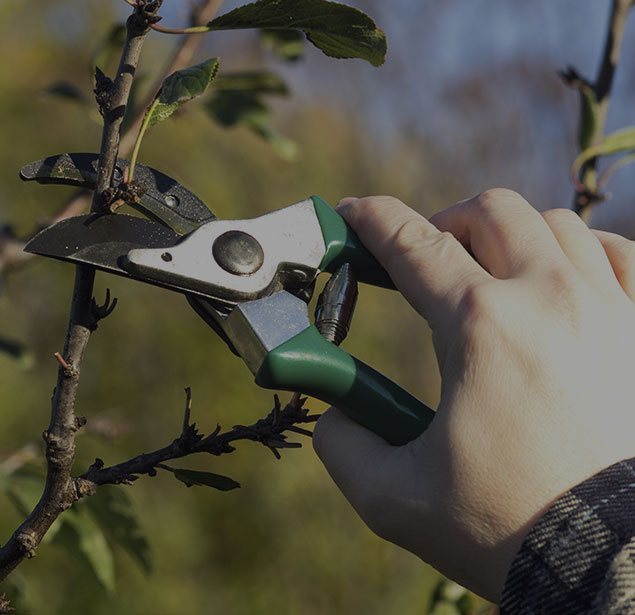 Houston Arbor Care Tree Service: Tree pruning in Houston, Memorial and Briarforest